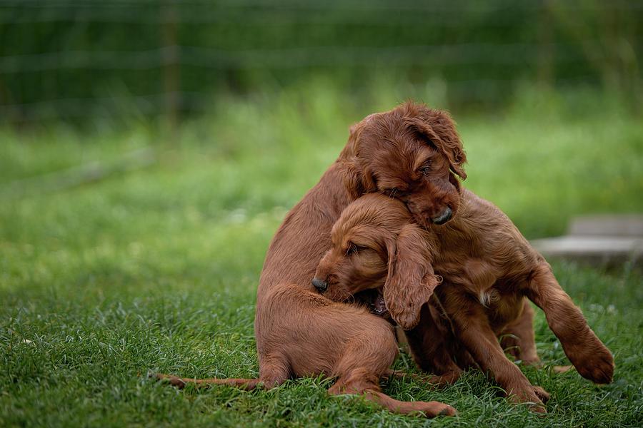 Puppy Love by Robert Krajnc
