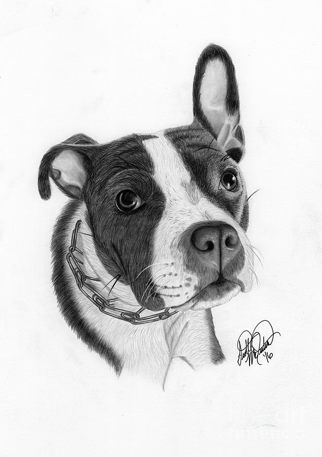 Puppy Love Drawing by Scott McIntire