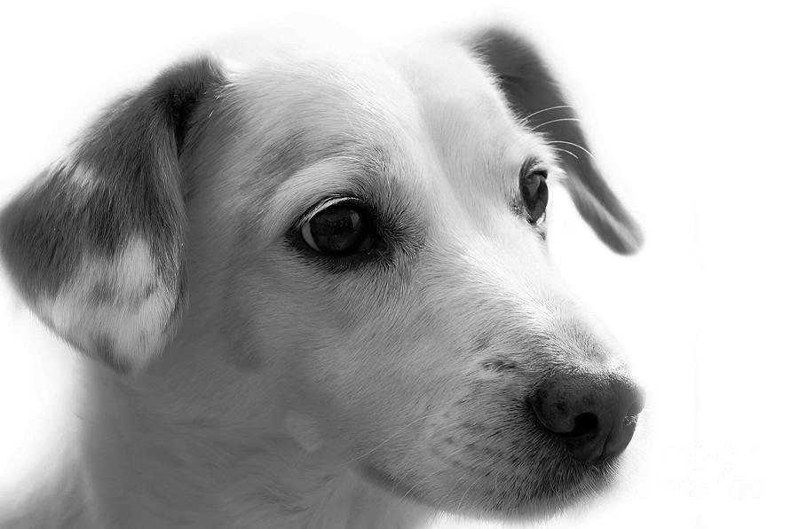 Puppy - Monochrome 4 by Jesse Watrous