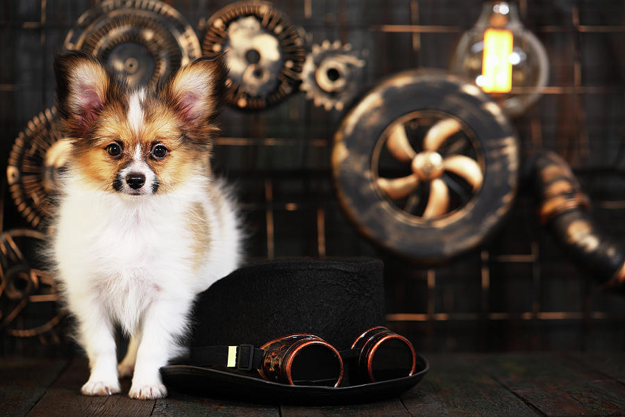 Puppy On Style Of Steampunk Photograph