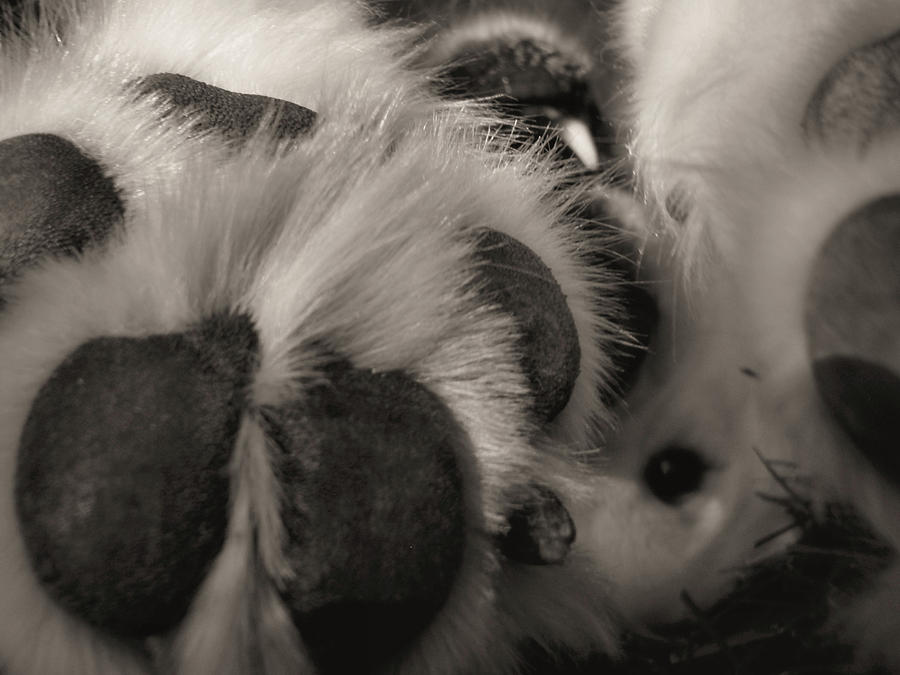 Dog Photograph - Puppy Paws by JAMART Photography