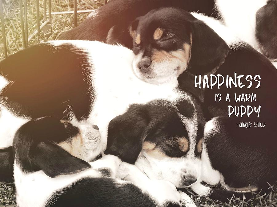 Dog Photograph - Puppy Pile Quote by JAMART Photography