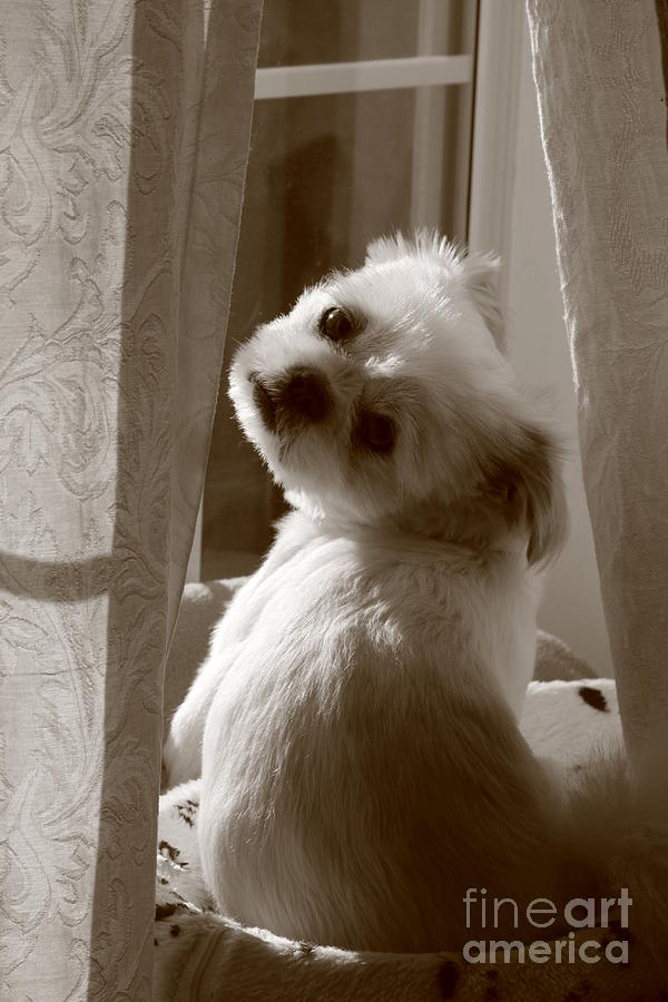 Sepia Photograph - Puppy Pose by Lynn Reid