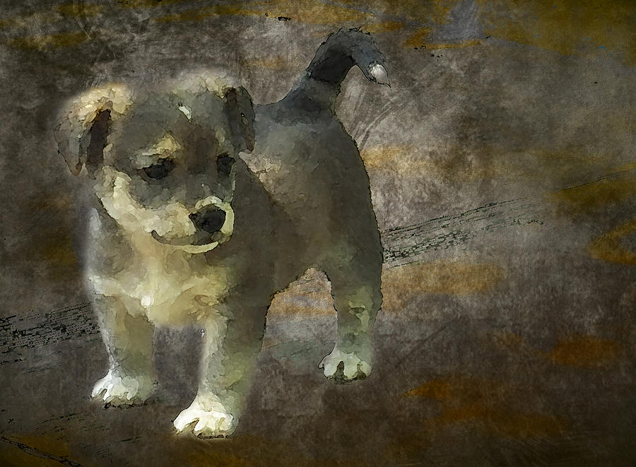 3d Photograph - Puppy by Svetlana Sewell
