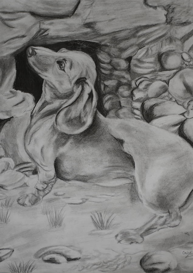 Pencil Drawing Drawing - Puppy  by Cristina Sofineti