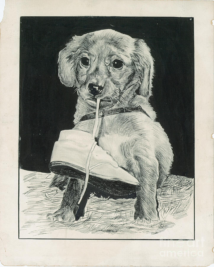 Puppy Painting - Puppy With Shoe by Samuel Showman