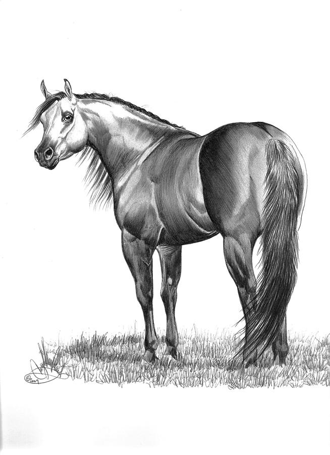 Horse Drawing Drawing - Pure Attitude by Cheryl Poland