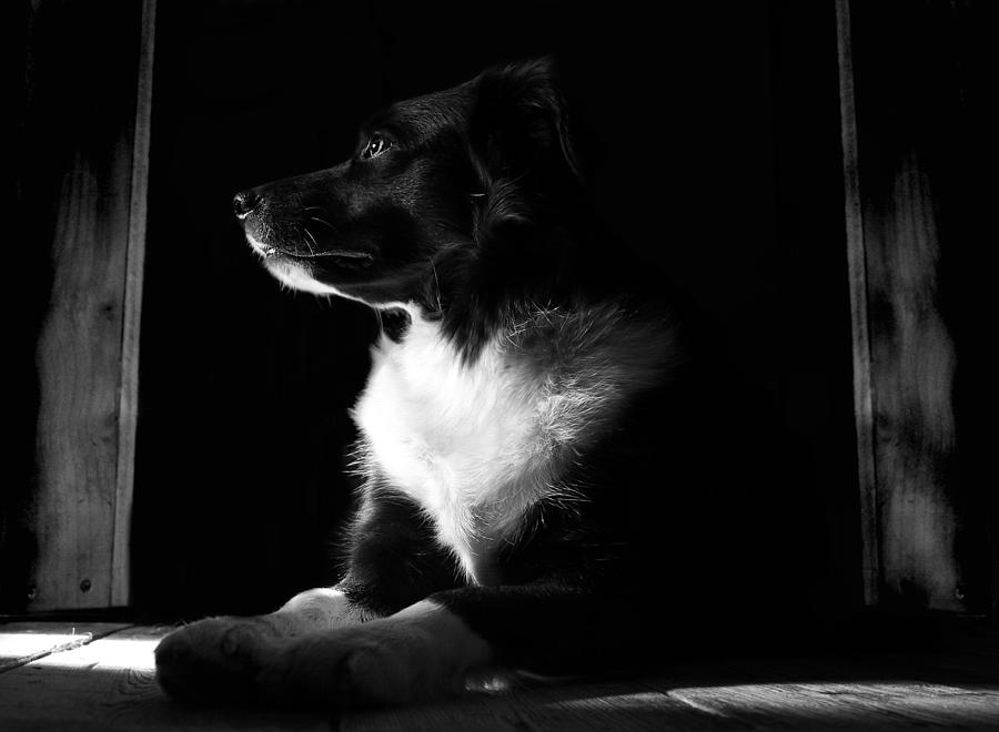 Dog Photograph - Pure Heart Of A Collie by Art  Creations