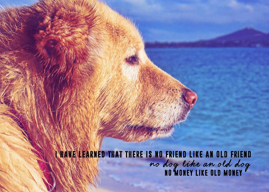 Dog Photograph - Pure Joy Quote by JAMART Photography