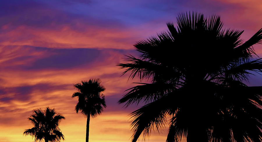 Pure Monsoon Sunsets by ELAINE MALOTT
