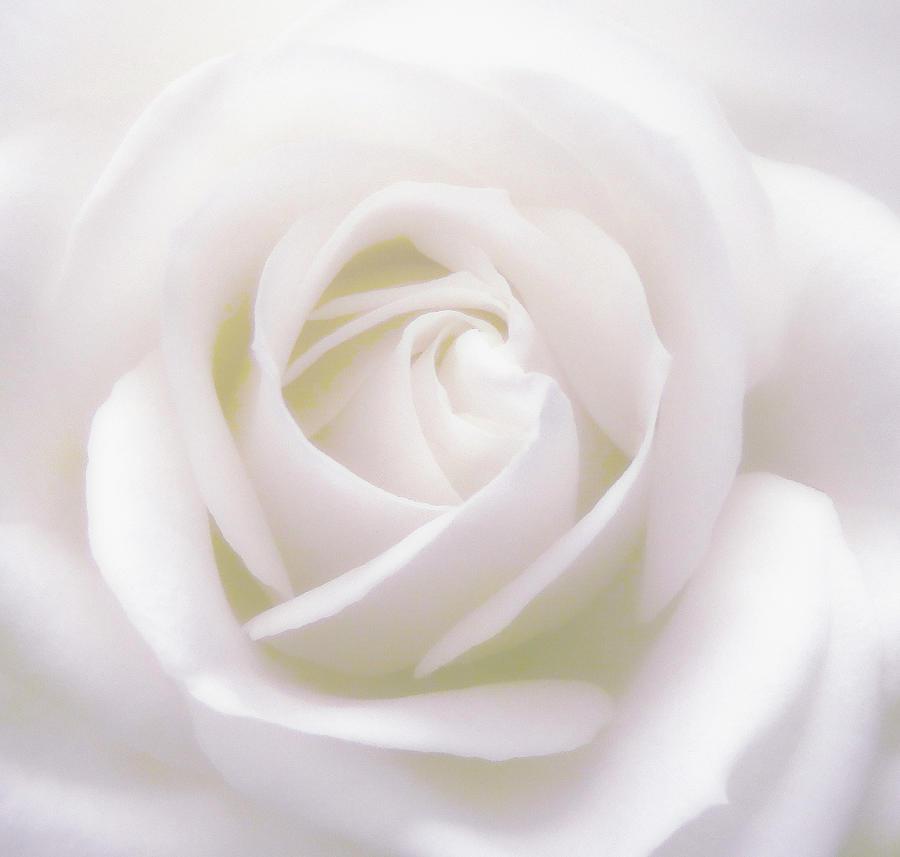 Pure White by Johanna Hurmerinta