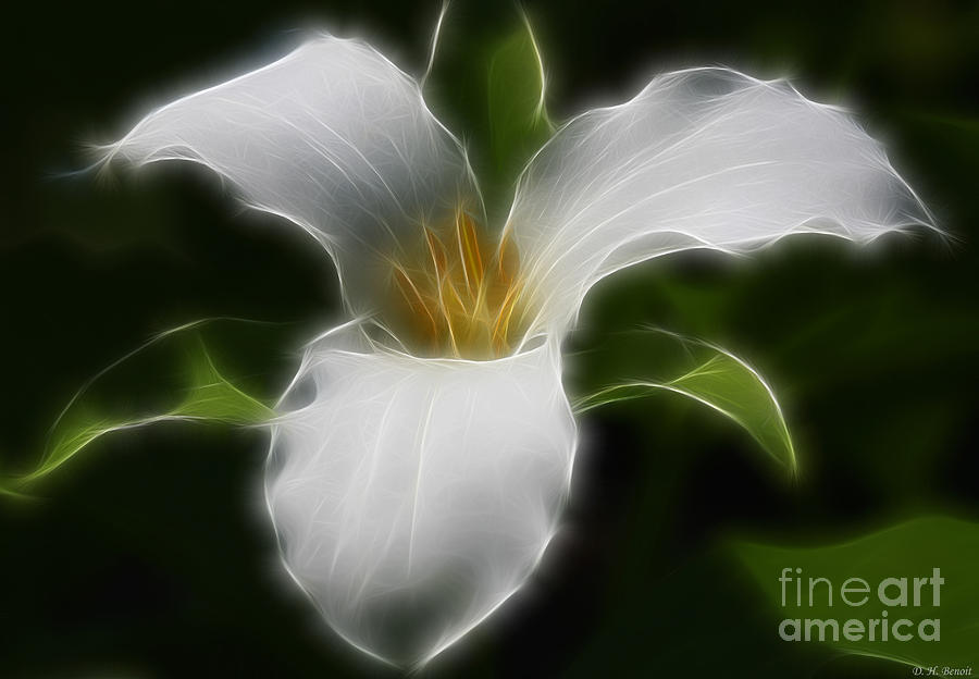 Flower Photograph - Pure White Trillium by Deborah Benoit
