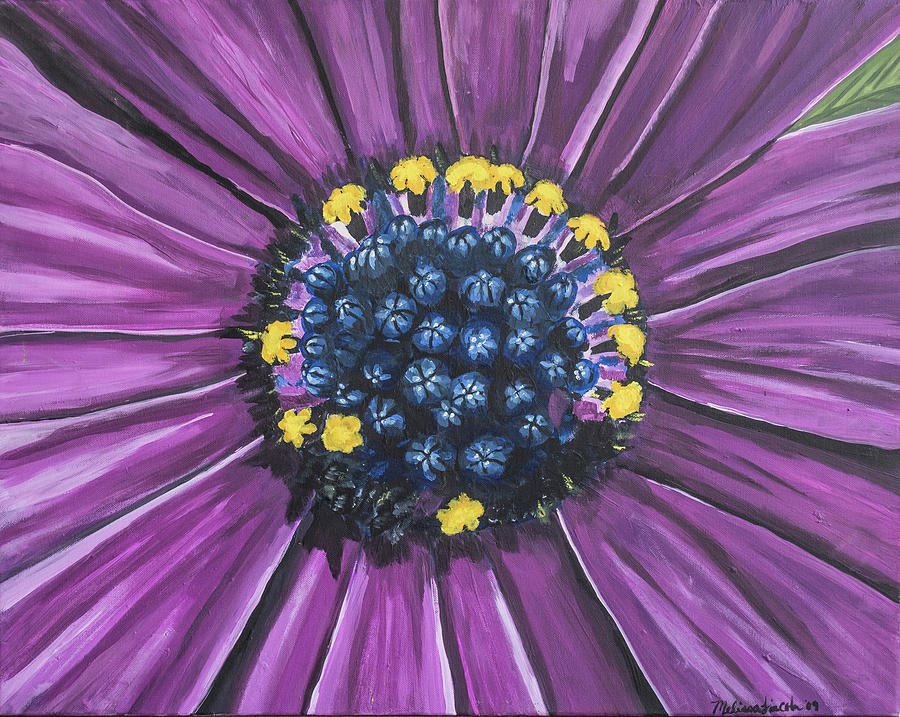 Purple African Daisy by MKD Lincoln