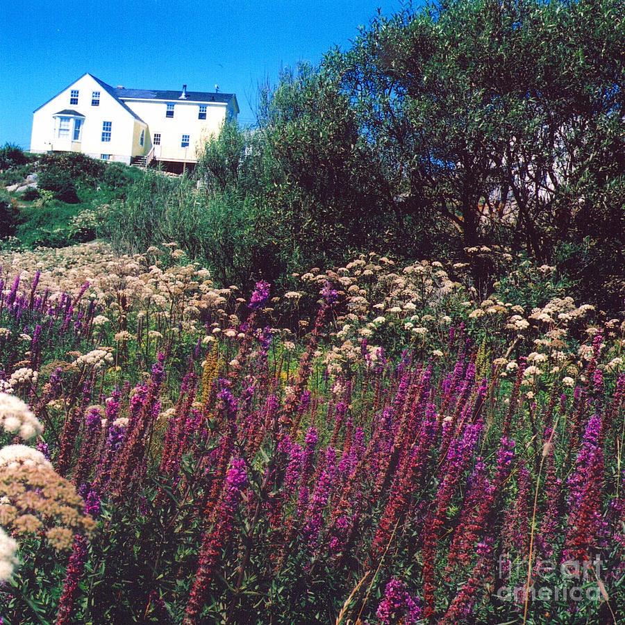 Houses Photograph - Purple by Andrea Simon