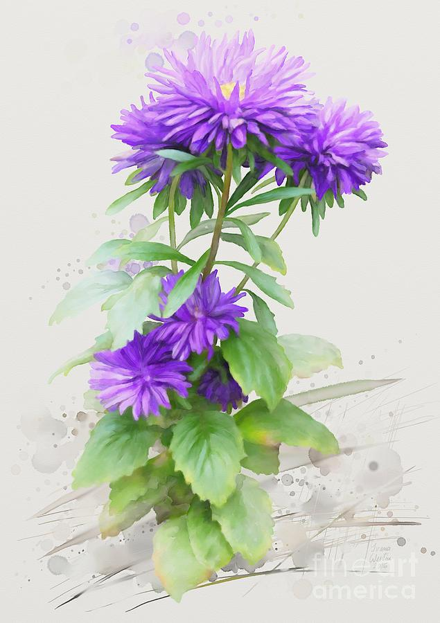 Floral Painting - Purple Aster by Ivana