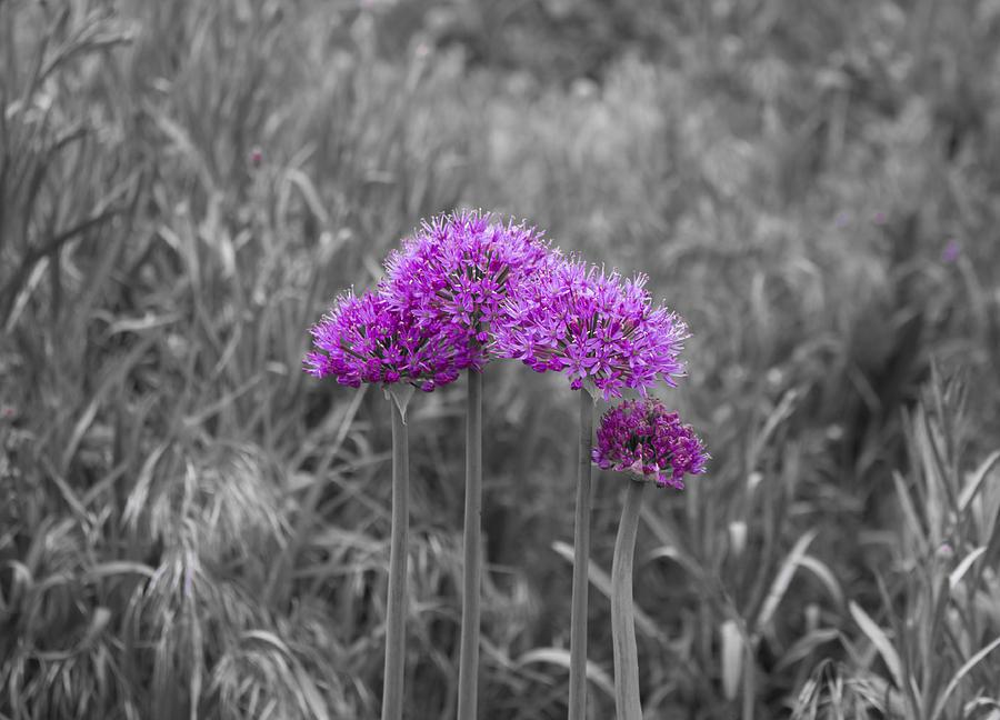 Purple  Beauty Photograph