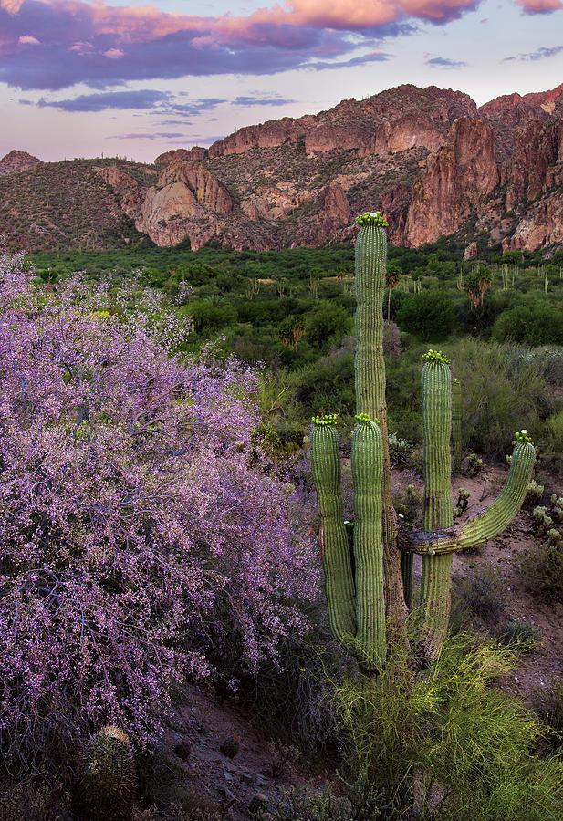 Ironwood Photograph - Purple Desert Beauty by Dave Dilli