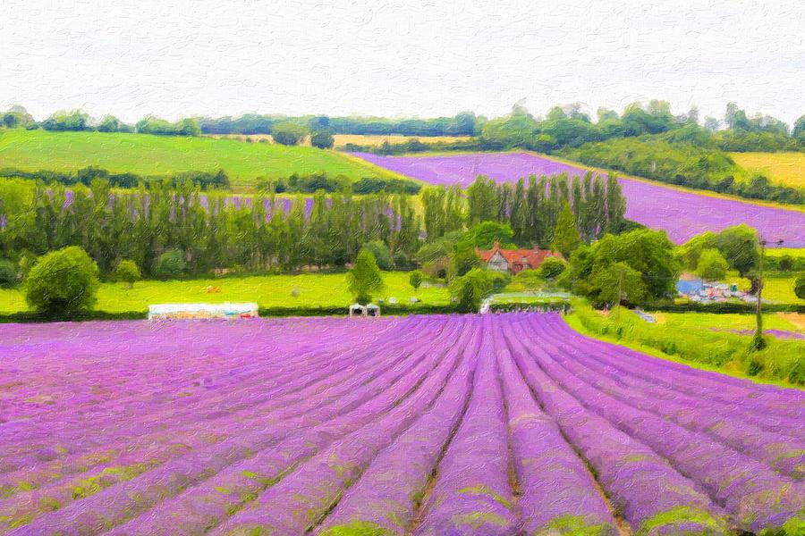 Lavender Fields Photograph - Purple Fields Of Love by Zahra Majid