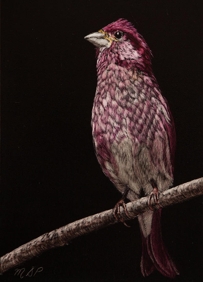 Purple Finch by Margaret Sarah Pardy