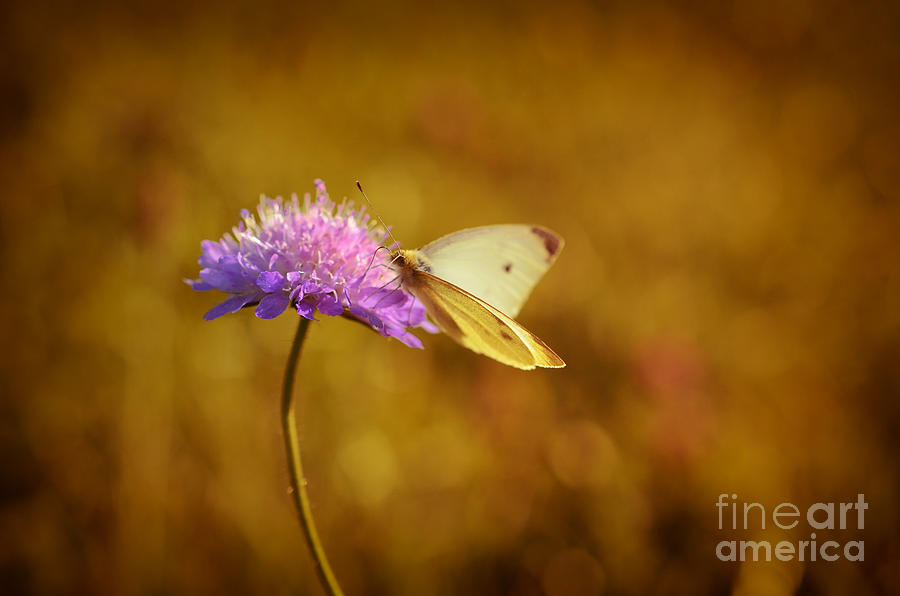 Purple Flower And Butterfly Photograph