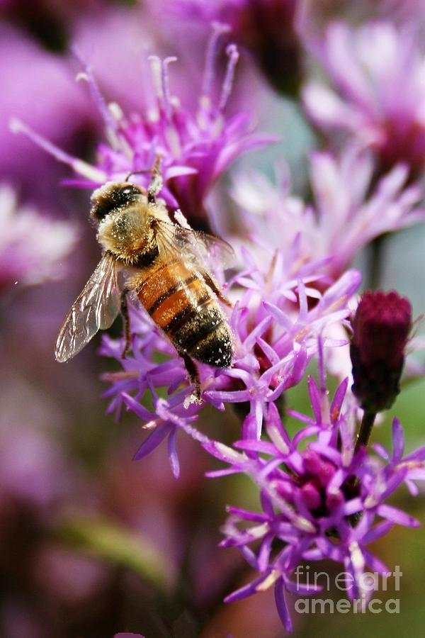 Flower Photograph - Purple Flower Bee by Robert Wilder Jr
