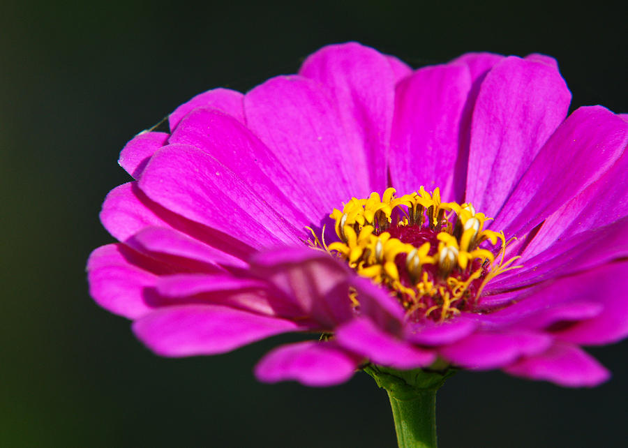 Flower Photograph - Purple Flower Close Up by Edward Myers