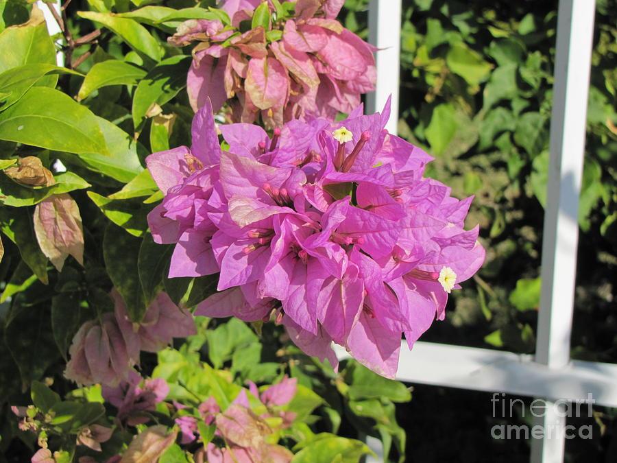 Flowers Photograph - Purple Flower by Michelle Powell