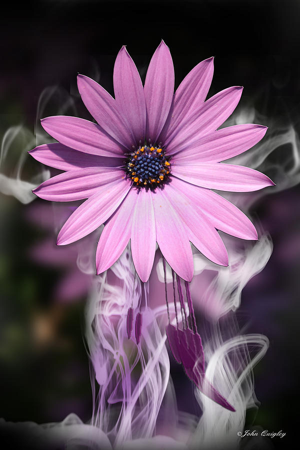 Purple Flower With Smoke by John Quigley