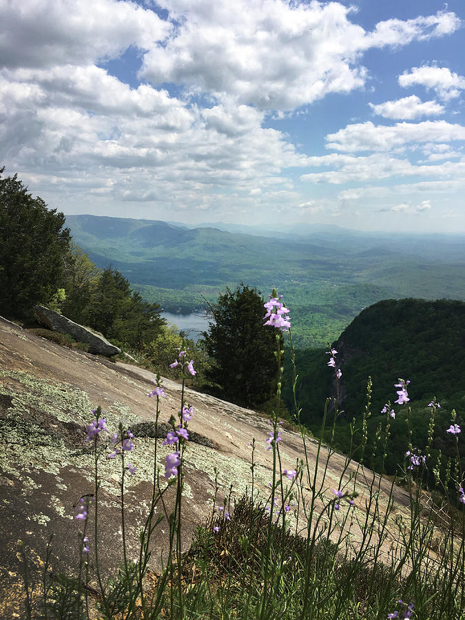 Purple Flowers at Table Rock Overlook by Kelly Hazel