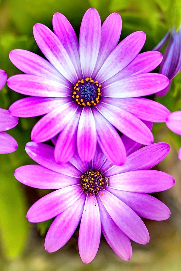 Spring Flowers Photograph - Purple Flowers by Az Jackson