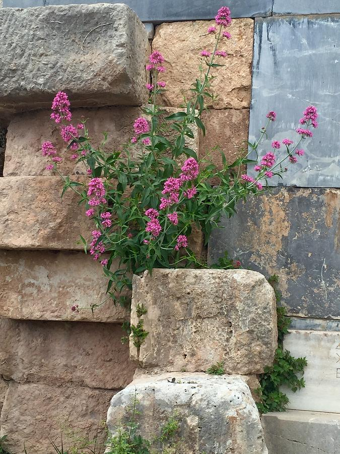 Purple Photograph - Purple Flowers In Ruins by Leslie Brashear