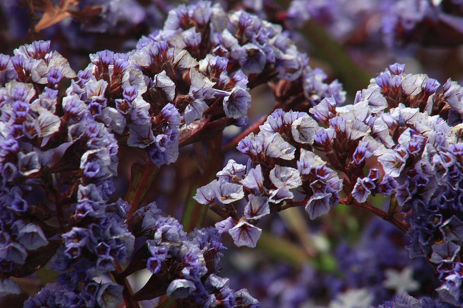 Purple Flowers by Jodi Vetter
