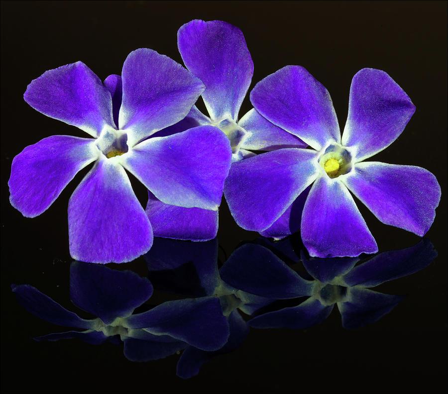 Purple Flowers Photograph By Paul Robertson