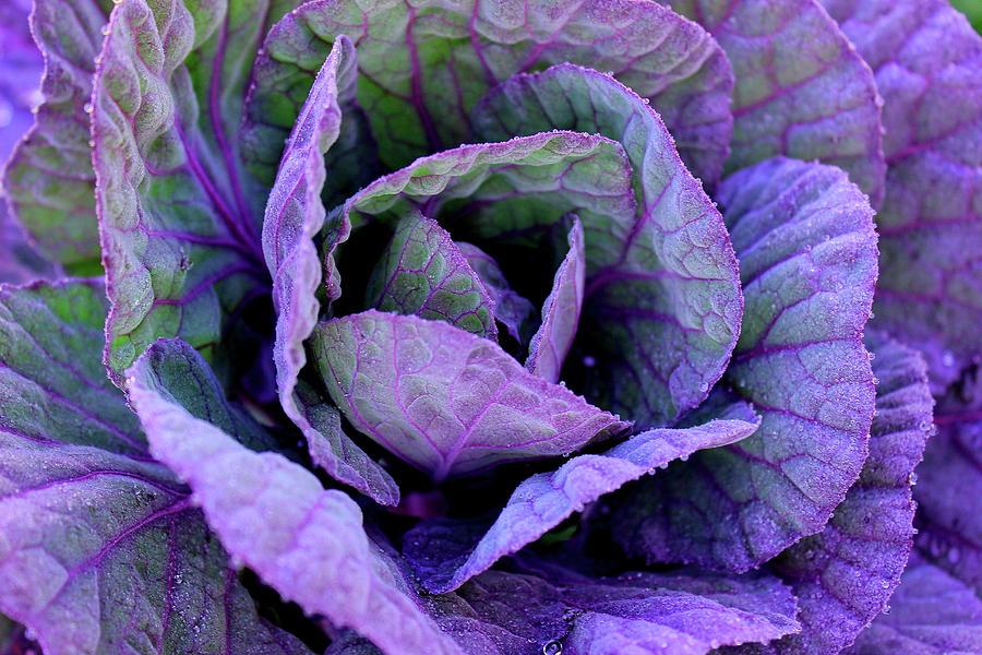 Purple Frost by Elizabeth Anne