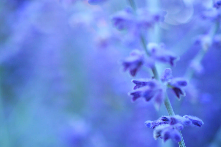 Purple Photograph - Purple Garden by Douglas MooreZart