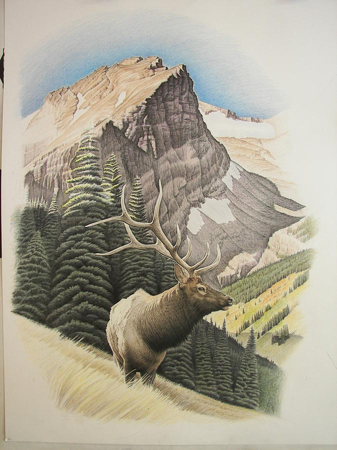 Elk Drawing - Purple Granite King by John Senior