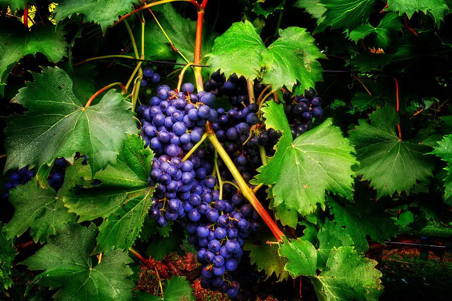 Grapes Photograph by Greg Mimbs