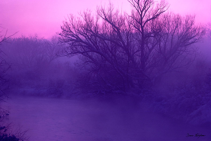Purple Haze by Bruce Thompson