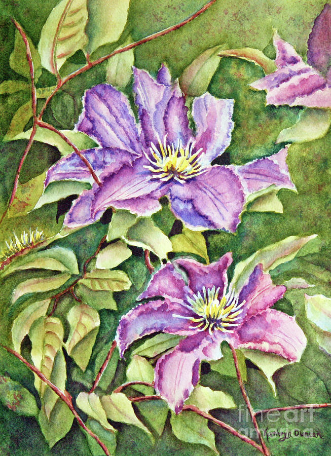 Purple Haze - Clematis by Kathryn Duncan