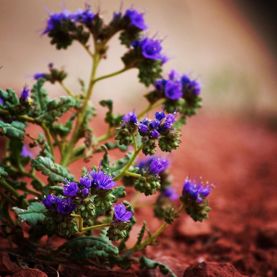 Purple Haze Photograph By Tegan Russell