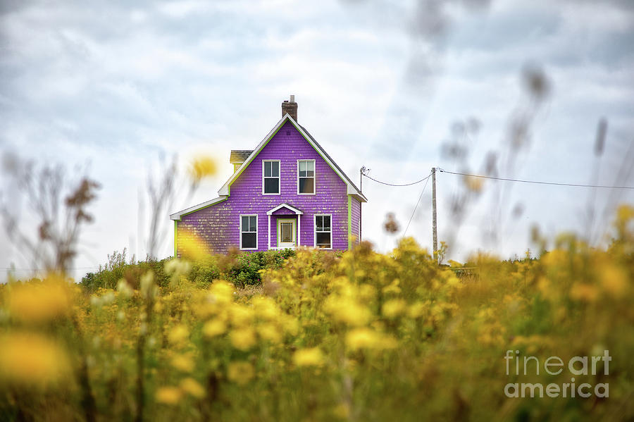 Island Photograph - Purple House And Yellow Flowers by Jane Rix