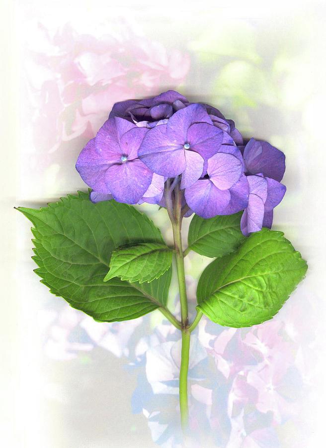Purple Mixed Media - Purple Hydrangea by Sandi F Hutchins