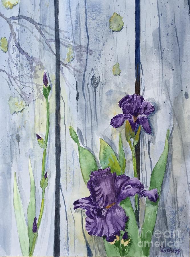 Purple Iris by Christine Lathrop