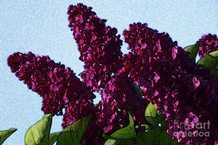 Purple Lilac 3 by Jean Bernard Roussilhe
