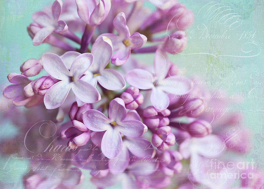 Lilac Photograph - Purple Lilacs With Text by Sylvia Cook
