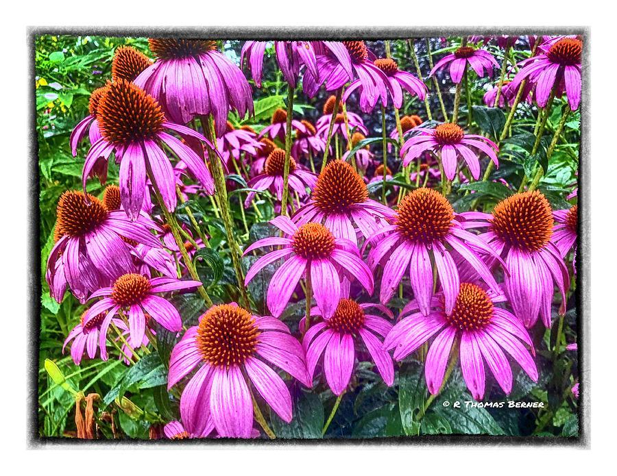 Purple Lovlies by R Thomas Berner