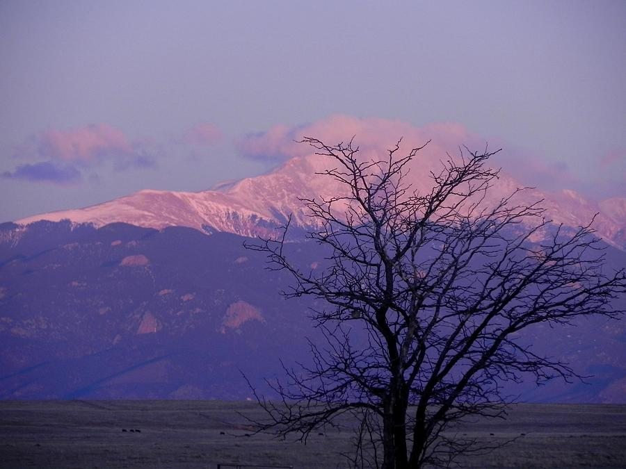 Mountains Photograph - Purple Mountain Majesty by Adrienne Petterson