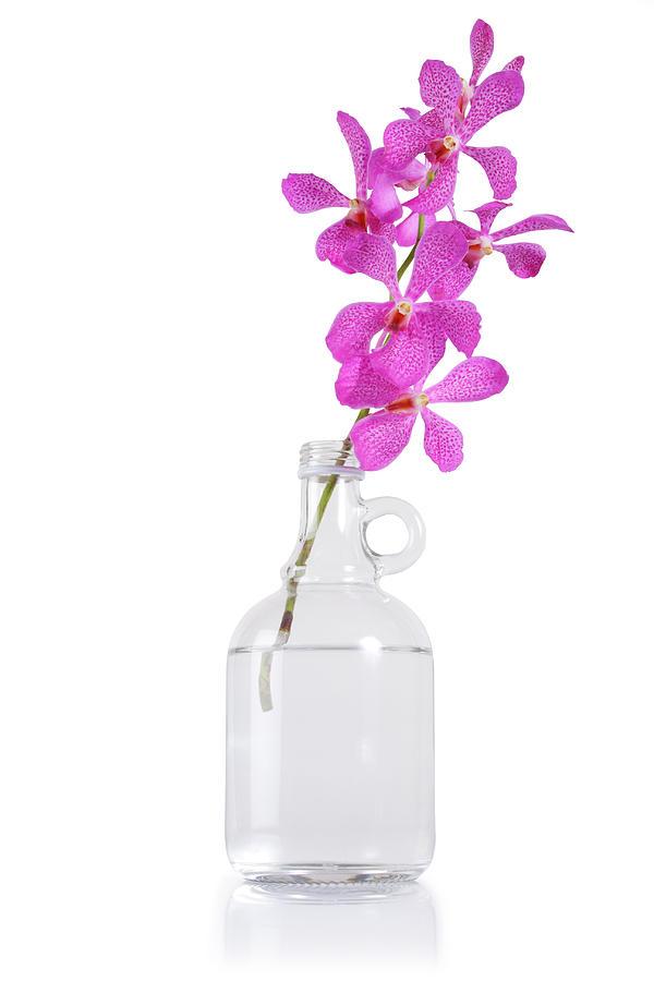 Asian Photograph - Purple Orchid Bunch by Atiketta Sangasaeng
