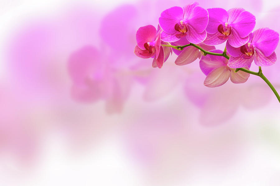 Artistic Photograph - Purple Orchid Flower On Blur Background by Irina Moskalev