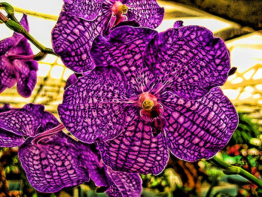 Flowers Photograph - Purple Orchid by Paul Cutright